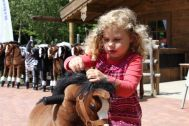 Many children have the desire to ride on a real horse. The Horse of My Little Horse can fulfill this desire. The animal is a horse riding toy horse that is characterized by a soft plush body, a robust Stahlramen and an innovative drive system. The materials used are of high quality.
