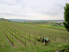 Le Pignoli vineyard, Vicenza, Italy. Best way to spend an afternoon...9 wine tastings each served with food.