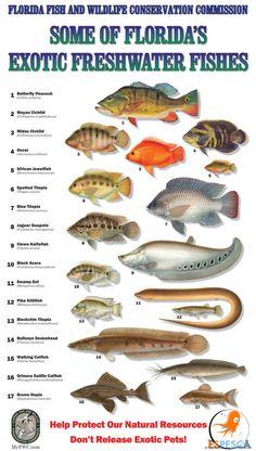 Infografías de peces 39