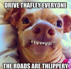 Drive thafley...