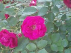 https://www.facebook.com/photo.php?fbid=10204123789279560