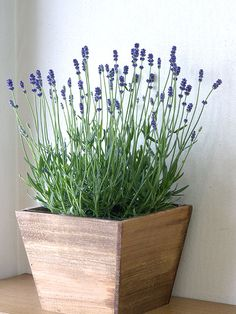 Lavender in the home, mmmmm