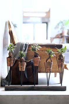 DIY-tip: Stoere plantenhouder voor je Ficus Ginseng #DIY #FicusGinseng #Woonplant #mwpd