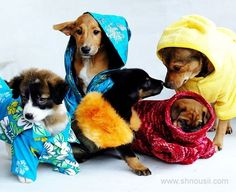 http://www.pets-life.com/marketplace/customized-dog-apparel-for-your-business-1/