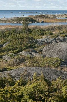 Geology along nature trails » The Kvarken Archipelago.  Molpehällorna.  Ostrobothnia province of Western Finland. Pohjanmaa.