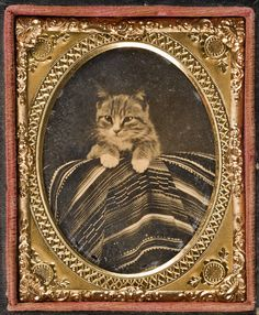 Ambrotype of a kitten on a Mexican sarape from the Southern Methodist University   taken ca. 1862-1868   in the Lawrence T. Jones III, Texas photography collection