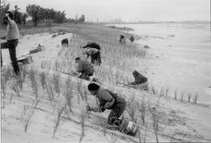 Part of Save the Dunes' success has always been its volunteers.  Back the early 90's we planted marram grass to help restore a foredune at Marquette Park in Michigan City.  Our ongoing stewardship efforts attract volunteers all year long.