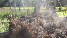 Basics for heating up your compost