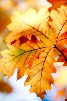 ♫ Every leaf speaks bliss to me, fluttering from the autumn tree. ♫ ~ Emily Bronte ~