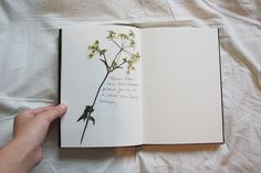 cl4fy:    little diary by the queen of carrot flowers on Flickr.