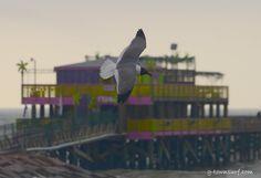 Island seagull stealing the spotlight. Galveston Texas, Galveston Island, Bird, Spotlight, Photography, Collection, Photograph, Birds, Fotografie