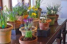 Growing with plants - seriously about plants:  HYACINTH THERAPY. You must plant in the fall or buy them at the grocery store.