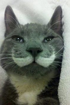 I mustache you a question...but I'll shave it for later :)