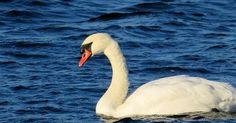 Bird, Water, Animals, Search, Wordpress, Gripe Water, Animaux, Searching, Birds