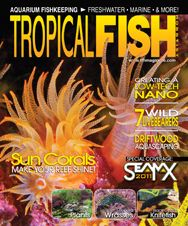 The vibrant August 2011 issue has articles on sun corals, repotting pond plants, raising synodontis catfish, and more!