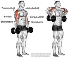 A compound pull exercise. Muscles worked: Lateral deltoid Posterior Deltoid Supraspinatus Brachialis Brachioradialis Biceps Brachii Middle and Lower Trapezii Serratus Anterior Infraspinatus and Teres Minor. Fitness Workouts, Fitness Tips, Fitness Motivation, Enjoy Fitness, Video Fitness, Health Fitness, Fitness Journal, Fitness Outfits, Fitness Planner