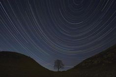 Northumberland dark sky park. Star trails, lone tree. I think this is Sycamore Gap in Hadrians Wall.