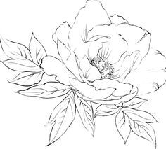 Embroidery Pattern. jwt Peony. jwt