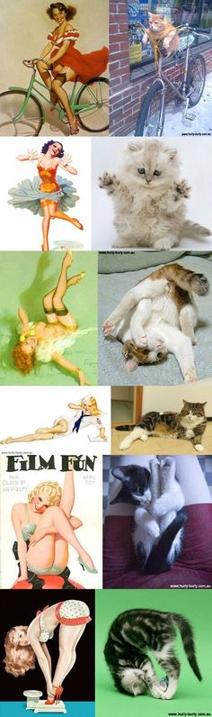 Cats That Look Like Pinup Girls - This makes me want to laugh much more than it should.. =x @Laura Jayson Julien http://amzn.to/2k2HTMQ