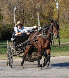 Amish man in buggy near Rockville, Indiana. Photo: mrgraphic via Flickr