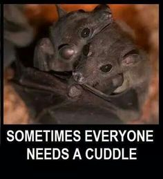 The Occasional Bat Baby Animals, Funny Animals, Cute Animals, Wild Animals, Beautiful Creatures, Animals Beautiful, Beautiful Things, All About Bats, All Bat