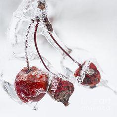 Fabulous winter photography on FAA by Elena Elisseeva