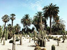 cactus park in Barcelona  #Barcelona #Montjuïc