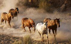 Fotografías de caballos III (Equinos de Pura Sangre) | Banco de Imagenes (shared via SlingPic)