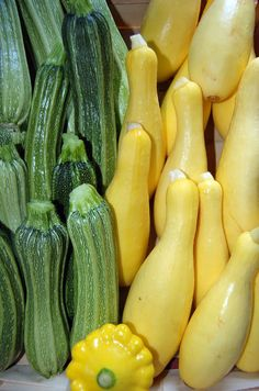 By Kathee Mierzejewski The summer squash plant is a versatile plant that can include so many different types of squash from yellow squash to zucchini. Growing summer squash is similar to growing any other type of vining plants. They also last a while in the refrigerator after picking, so you don't have to eat them…