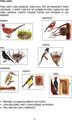 Kindergarten, Bird Species, Birds, Teaching, Education, School, Zoology, Animaux, Projects