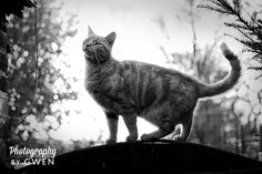 This Fashion is Mine: How to   Take Photos of Cats on International Cat Day 2015! Improve your feline photography