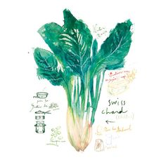 Rustic kitchen art, Vegetable poster, Swiss chard french recipe, 8X10 print green kitchen decor Watercolor food. $25.00, via Etsy.