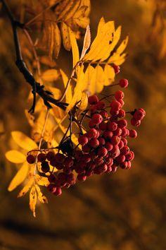 """elvenforestworld: """"  Autumn Gold by Alexander Bocharov """""""