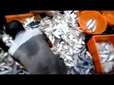 Catching tuna Indian style/huge fishing in india!! Must watch