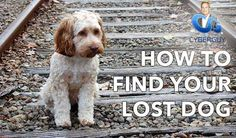 """Be sure to check out this week's new episode from my """"Ask Kurt"""" digital series! http://www.cyberguy.com/how-to-find-your-lost-dog/  #askkurt #pets #lostdogs #dog #dogs #breeds #puppies #frenchbulldog #lab #goldenretriever #bulldog #beagle #yorkshireterrier #poodle #boxer #rottweiler #vizsla #scottishterrier #chihuahua #goldendoodle"""