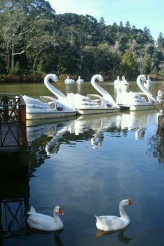 Lago Negro - Gramado RS