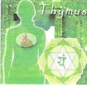 dharmasacredspaces: CHAKRA AND THE SEVEN GLANDS OF THE ENDOCRINE SYSTEM