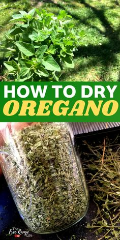 Do you have a garden full of oregano? Learn how to dry oregano so you can enjoy that great oregano taste in dishes and meals all year long! Includes the best time to harvest oregano and how to dry it quickly to preserve the flavor and benefits! How To Dry Oregano, Vegetable Gardening, Organic Gardening, Gardening Tips, Spice Combinations, Roasted Tomato Sauce, Oregano Leaves, Kitchen Plants, Herbs