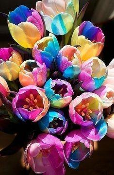 10 pcs tulip seeds, tulip flower, (not tulip bulbs), Flowers symbolizes love, tulipanes flower plant for home garden plants Rare Flowers, Bulb Flowers, Tulips Flowers, Planting Flowers, Beautiful Flowers, Colorful Flowers, Rainbow Flowers, White Tulips, Send Flowers