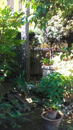 #giardino #garden #pianetaverde #natura