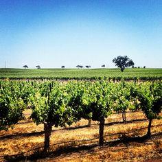J. Lohr Winery, Paso Robles