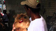 Morador de rua de Santos recusa vender seu cão por R$ 2 mil