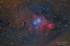 """NGC2264 """"Cone"""" nebula di Maurizio Cabibbo. Immagine incompleta (manca l'idrogeno) della nebulosa """"Cono"""" nella costellazione dell'Unicorno ripresa con Takahashi TOA130 e camera ccd Sbig STL11000. Elaborazione LRGB. Filtri: L Astronomik CLS CCD, Astrodon RGB, 210:80:80:80. Software MaximDL, PixInsight, PS CS5. Località Casole d'Elsa – Siena  Data e Ora di acquisizione 6 Febbraio 2016 alle 01:50. Al link i dettagli della ripresa. Siena, Cosmos, Postcards, Elsa, Software, Celestial, Space, Travel, Astronomy"""