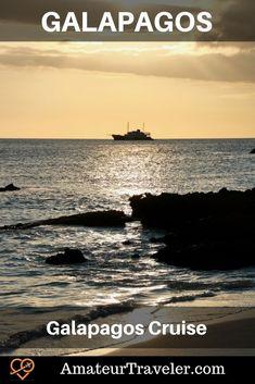 Galapagos Cruise on Quasar's Evolution #galapagos #islands #thingstodoin #cruise #sealion #turtle #bird #boobie #tortoise #travel #trip #vacation Cruise Travel, Travel Trip, Travel Destinations, Dream Trips, Dream Vacations, Galapagos Islands, Travel Plan, Ancient Ruins, South America Travel