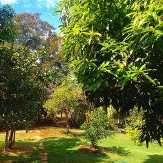 Wish you were here... at the backyard of Pousada Caminho Encantado.  #instafit #fit #fitgirl #nikerunning #wellness #hiking #view #travelgram #motivation #workout  #morningrun #gymlife #instarunner #fitness #fitnessaddict #running #beautiful #healthy  #morning  #landscape #nature #travelblog #johnofgodbrazil #fitspo #wanderlust #johnofgod #fitgirls #nikewomen by debbie.akamine