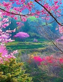 Stunning Picz: Peekaboo Pink