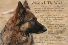 Loss of a pet, rainbow bridge, quotes, paw prints from the fundy