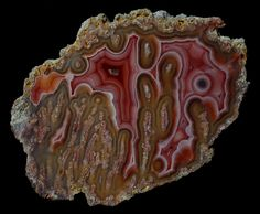 Laguna Agate Pseudomorph | par Wood's Stoneworks and Photo Factory