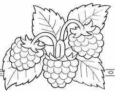 Berry Coloring Pages Fruit Coloring Pages, Colouring Pages, Coloring Sheets, Coloring Books, Fruit Painting, Fabric Painting, Outline Drawings, Easy Drawings, Arte Do Galo