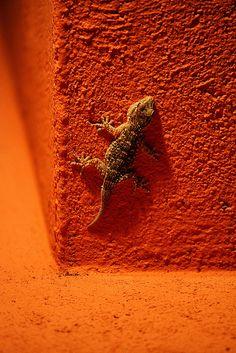 Orange Wall and Gecko by Fotourbana #HelloOrange
